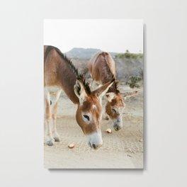 Two Donkeys Eating Apples Metal Print