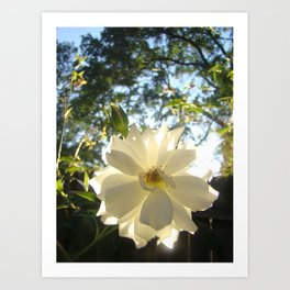 Moon Flower Art Print