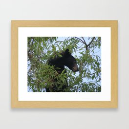 Bearly-Contained Excitement Framed Art Print