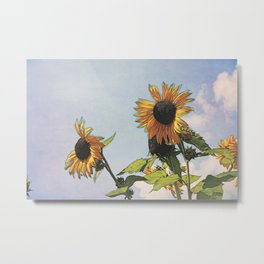 Sunflower Daze Metal Print