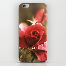The Rose iPhone Skin