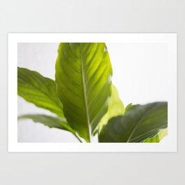 Hojas verdes (1) (green leafs) Art Print