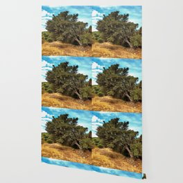Olive Tree Wallpaper
