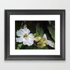 Flower Study II Framed Art Print