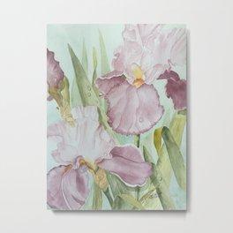 Lavender Beauties (irises) Metal Print
