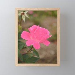 The Fairest of Roses Framed Mini Art Print