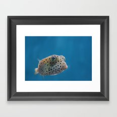 Yellow Boxfish Framed Art Print
