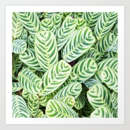 Botanical green white natural tropical leaves Art Print