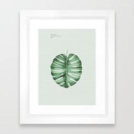 Monstera, Leaf, Tropical, Wall Art Framed Art Print