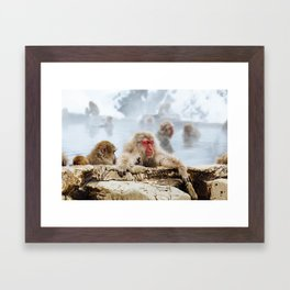 The Japanese macaque also known as the snow monkey Framed Art Print