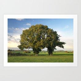Two Trunk Tree Art Print