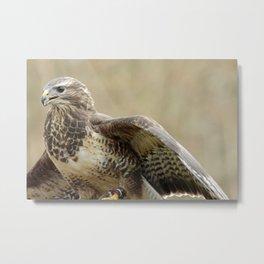 magnificent falcon Metal Print