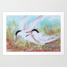 Seabirds - Terns Art Print