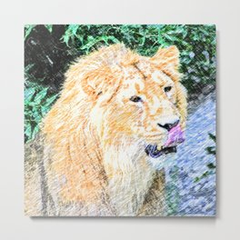 Sketchy Lion  Metal Print