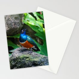 A Stunning African Superb Starling Stationery Cards