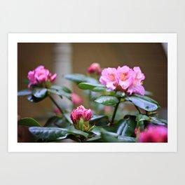 Pretty in Pink2 Art Print