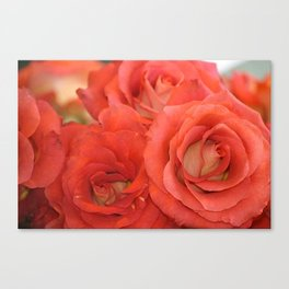 Market Roses at Pike Place Seattle Canvas Print