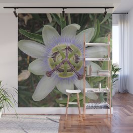 Passion Flower Blossom Wall Mural