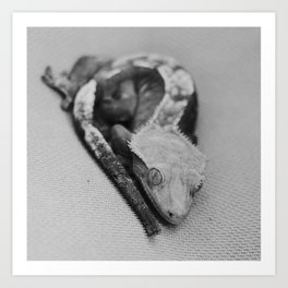 gene the gecko Art Print