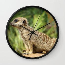 Meerkat On Watch Wall Clock