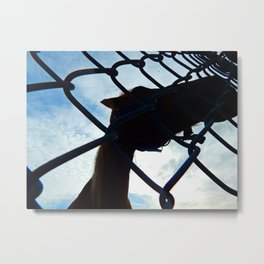 Horse at the Fence Metal Print