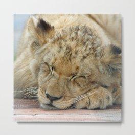 Lion_2014_1202 Metal Print