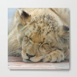 Lion_20141202_by_JAMFoto Metal Print