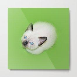 Siamese Kitten Cat snow white blue eye Metal Print