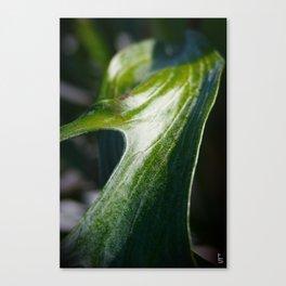 Staghorn Fern I Canvas Print