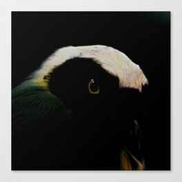 The mystery of the Bird Canvas Print