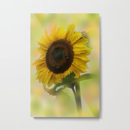 the beauty of a summerday -17 - Metal Print