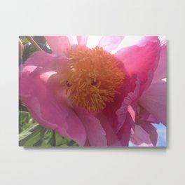 Wild rose in sun Metal Print