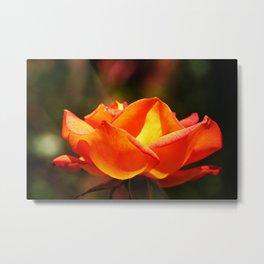 Red Rose Glowing Metal Print