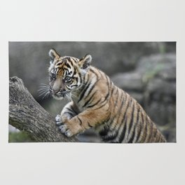 Curious Sumatran Tiger Cub Rug
