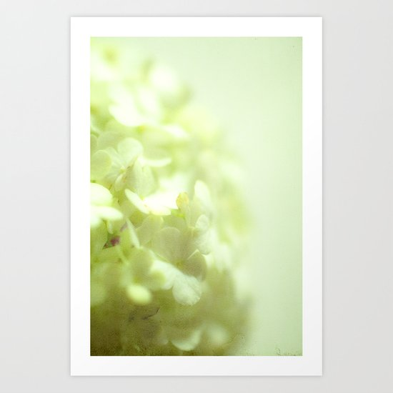 {delicate} Art Print