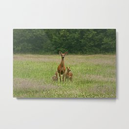 Doe with Twin Fawns Metal Print