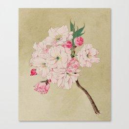 Fukurokuju - God of Longevity Cherry Blossoms Canvas Print