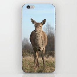 Wild Red Deer iPhone Skin