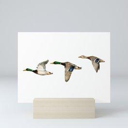 Flying Mallards Mini Art Print