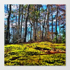 Across The Moss Canvas Print
