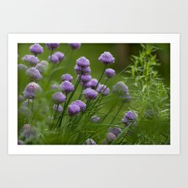 Herb Garden Chives Tarragon Parsley Art Print