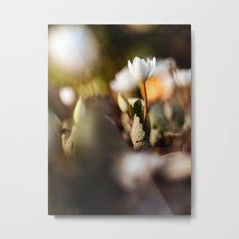 Flower Photography by Aaron Burden Metal Print
