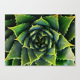 Green and thorns Canvas Print