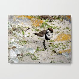 Two Ring Plover Metal Print