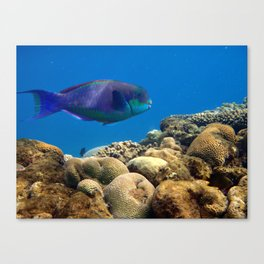 The underwater life Canvas Print