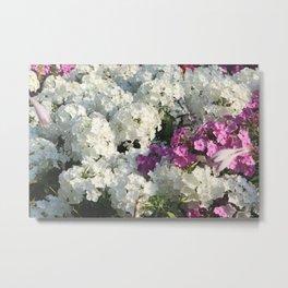 White & violet flowers flowerbed Metal Print