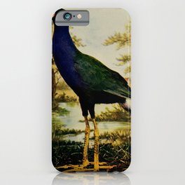 Vintage Print - Birds and Nature (1905) - Purple Gallinule iPhone Case