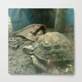 Giant Turtle Metal Print