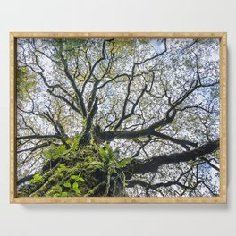 Centenary oak with the trunk covered in moss and green plants Serving Tray