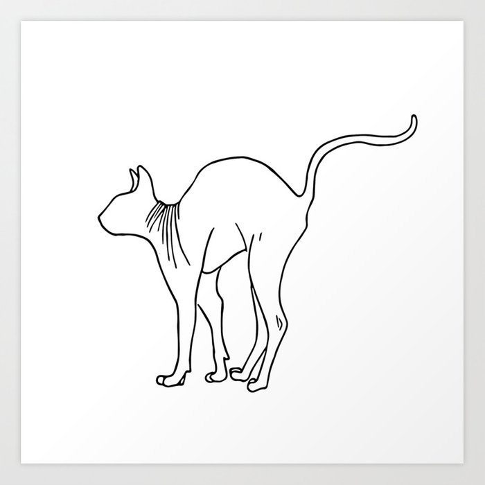 Sphynx Cat Arching Its Back